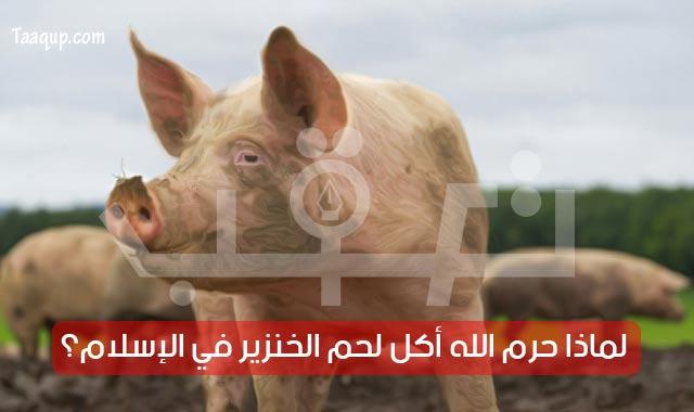 لماذا حرم الدين الإسلامي أكل لحم الخنزير؟